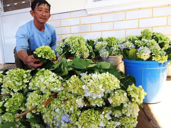 bi quyet cham hoa cam tu cau vuon nha no bung, sang ruc, dep nhu hoa da lat - 3