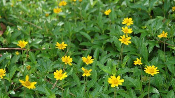 """cach trong hoa cuc dai """"de nhu choi"""", to diem cho vuon nha - 2"""