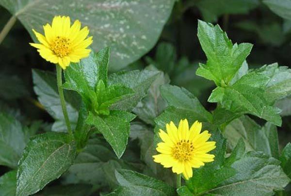 """cach trong hoa cuc dai """"de nhu choi"""", to diem cho vuon nha - 1"""