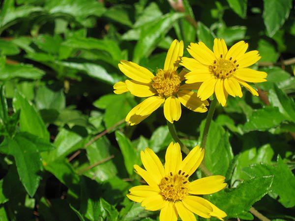 """cach trong hoa cuc dai """"de nhu choi"""", to diem cho vuon nha - 5"""
