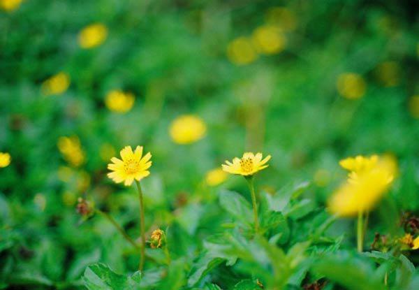 """cach trong hoa cuc dai """"de nhu choi"""", to diem cho vuon nha - 3"""