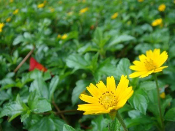 """cach trong hoa cuc dai """"de nhu choi"""", to diem cho vuon nha - 4"""